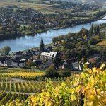 La région de la Moselle en Allemagne est mûre pour les accords sur les domaines viticoles