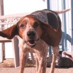 Rencontrez l'animal de compagnie de la semaine de la SPCA, Flo