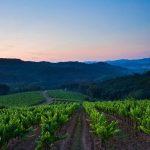 Cinq endroits pour acheter des vignobles français avec un budget