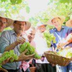 G1 - La récolte de raisin est ouverte en RS avec une estimation de 600 mille tonnes