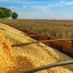 L'USDA relève l'estimation de la production brésilienne de maïs pour 2019/20 à 103 millions de tonnes.