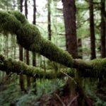 La Colombie-Britannique est invitée à protéger les forêts anciennes en péril