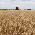 L'estimation de la récolte de blé de l'Argentine passe à 17 millions de tonnes, selon la bourse.