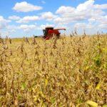 L'estimation d'avril prévoit une récolte record de 264,5 millions de tonnes pour 2021 - O Presente Rural